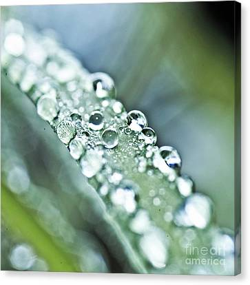 Tiny Waterworld And A Leaf Canvas Print by Heiko Koehrer-Wagner