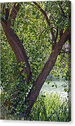 Canvas Print featuring the photograph Tree At Stow Lake by Kate Brown