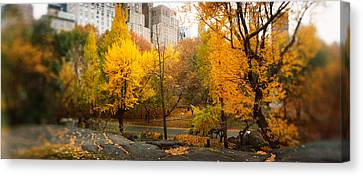 Trees In A Park, Central Park Canvas Print by Panoramic Images