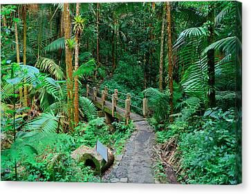 Tropical Rain Forest In San Juan Canvas Print