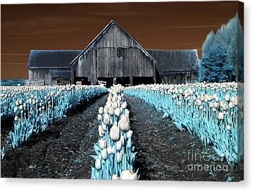 Tulip Barn Canvas Print