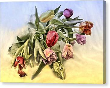 Tulips Canvas Print by Manfred Lutzius