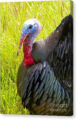 Turkey Canvas Print by Graham Foulkes