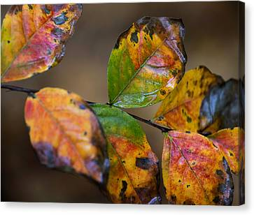 Canvas Print featuring the photograph Turning Leaves by Stephen Anderson
