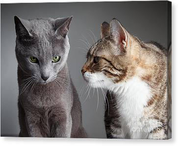 Two Cats Canvas Print by Nailia Schwarz