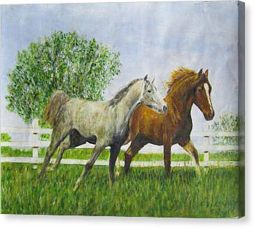 Two Horses Running By White Picket Fence Canvas Print