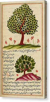 Two Trees Canvas Print by British Library