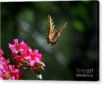 Up And Away Canvas Print by Nava Thompson