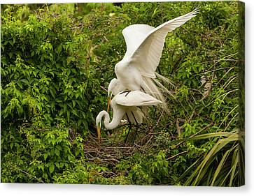 Usa, Florida, Anastasia Island Canvas Print by Jaynes Gallery