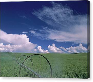 Reynolds Canvas Print - Usa, Idaho, Green Wheat Field, Clouds by Gerry Reynolds