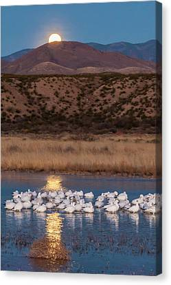 Usa, New Mexico, Bosque Del Apache Canvas Print by Jaynes Gallery