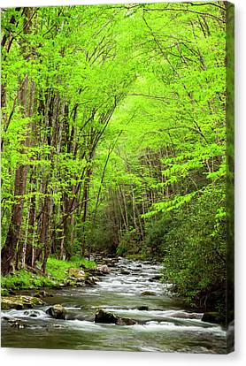 Usa, North Carolina, Great Smoky Canvas Print by Ann Collins
