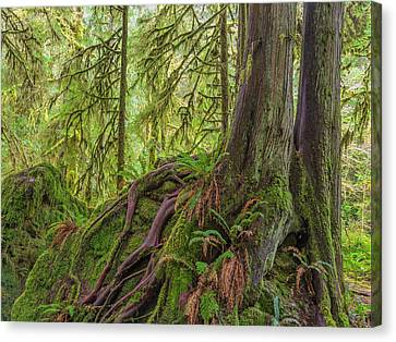 Usa, Washington State, Olympic National Canvas Print by Jaynes Gallery