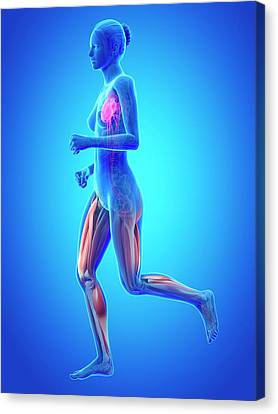 Vascular System Of Runner Canvas Print by Sebastian Kaulitzki