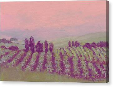 Vineyard At Dusk Canvas Print