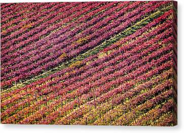 Vineyard Canvas Print by Stefano Termanini