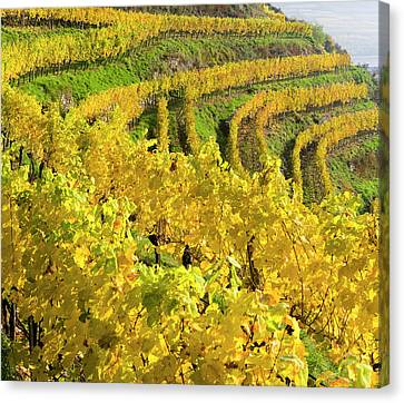 Grapevines Canvas Print - Vineyards Near Village Spitz by Martin Zwick