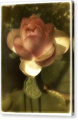 Vintage Lotus Canvas Print