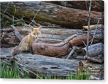Waiting Canvas Print by Todd Bielby