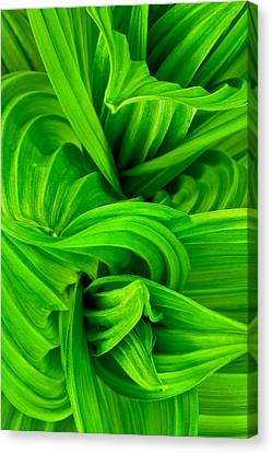 Wavy Green Canvas Print by Jeff Sinon