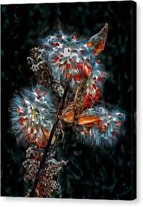 Weed Galaxy  Canvas Print by Steve Harrington