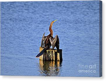 Wet Wings Canvas Print by Al Powell Photography USA