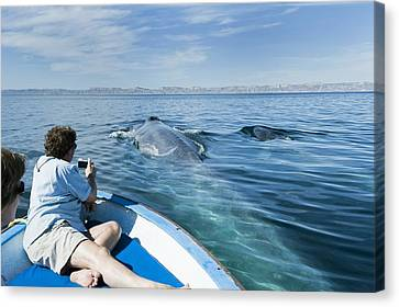 Whale Watching, Mexico Canvas Print by Science Photo Library
