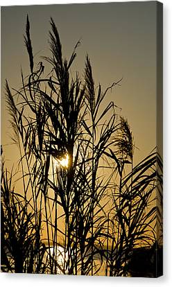 Canvas Print featuring the photograph Whalehead Sunset Obx #3 by Greg Reed