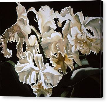 white Cattleya orchids Canvas Print by Alfred Ng