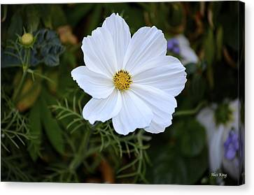 Canvas Print featuring the photograph White Flower by Alex King