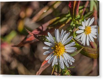 Canvas Print featuring the photograph White Flower Dew-drops Autumn by Jivko Nakev