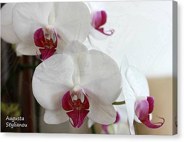 White Orchids Canvas Print by Augusta Stylianou
