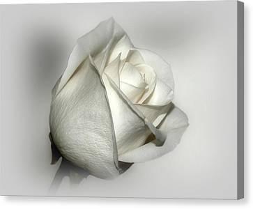 White Rose Canvas Print by Sandy Keeton