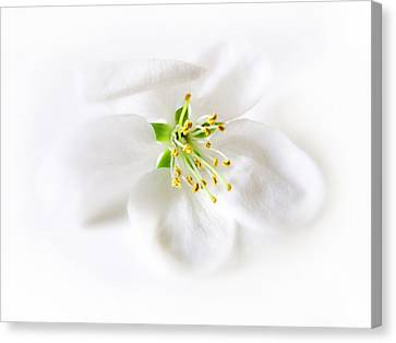 Whiter Shade Of Pale Canvas Print by Jessica Jenney