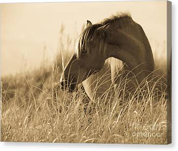 Breeze Canvas Print - Wild Horse On The Beach by Diane Diederich