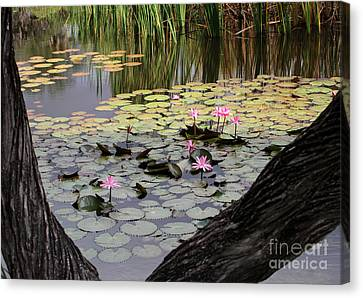 Wild Water Lilies In The River Canvas Print by Sabrina L Ryan