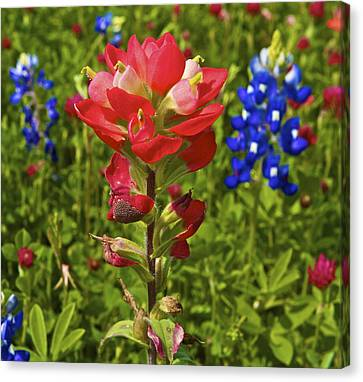 Canvas Print featuring the  Wildflowers by John Babis