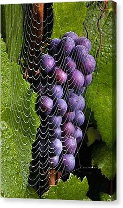 Wine In A Web Canvas Print by Jean Noren