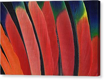 Wing Feather Design From The Amazon Canvas Print