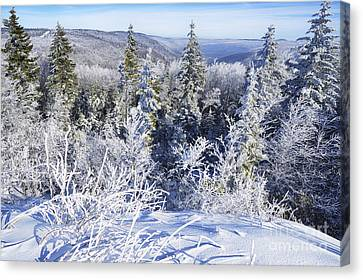 Winter Along The Highland Scenic Highway Canvas Print by Thomas R Fletcher