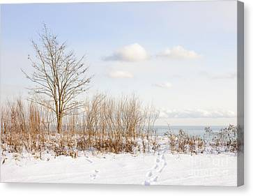 Winter Shore Of Lake Ontario Canvas Print