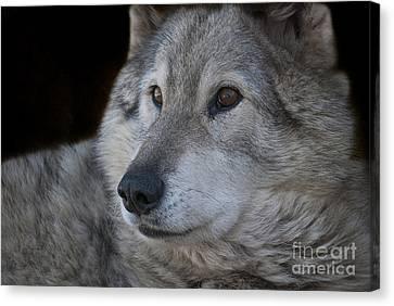 Wolf Canvas Print by Juli Scalzi