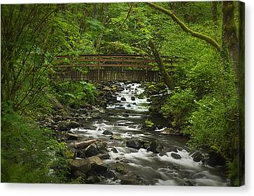 Wooded Stream In The Spring Canvas Print by Andrew Soundarajan
