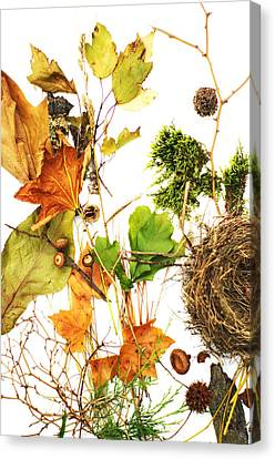 Woodsy Arrangement Canvas Print by Suzanne Powers