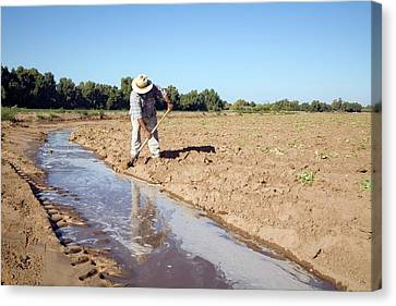 Worker Digging Irrigation Channels Canvas Print by Jim West
