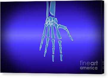 X-ray View Of Human Hand Canvas Print by Stocktrek Images