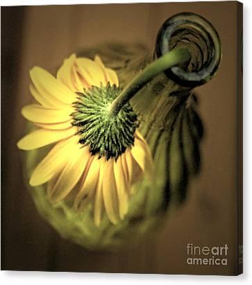 Yellow Canvas Print by Amanda Barcon