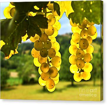 Grapes Canvas Print - Yellow Grapes by Elena Elisseeva