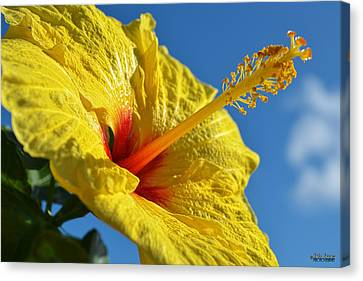Canvas Print featuring the photograph yellow Hula Girl Hibiscus by Aloha Art