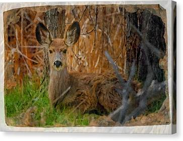 Young Mulie Canvas Print